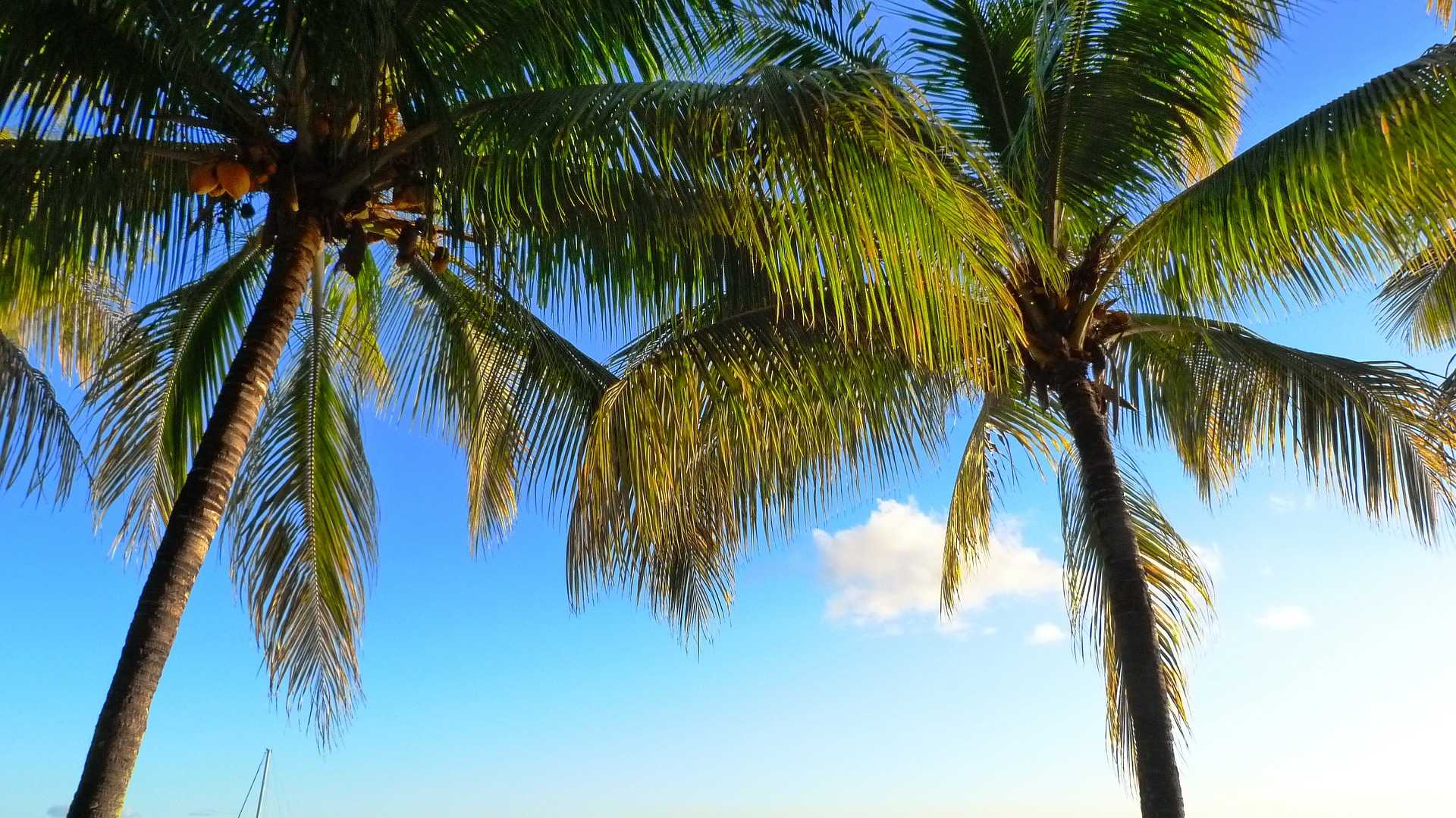 original_palm-trees-630089_1920